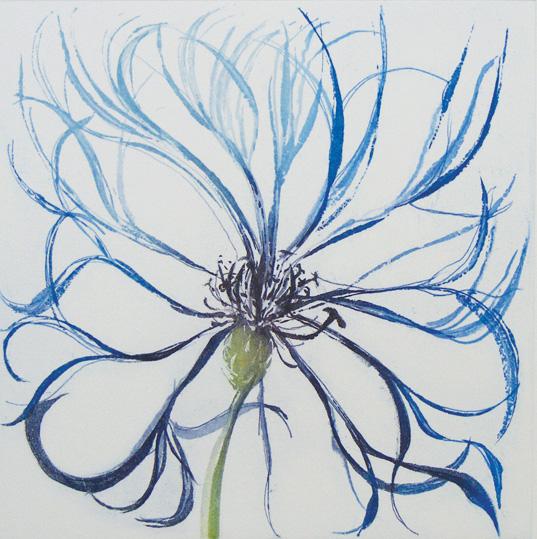 Centaurea Montana I