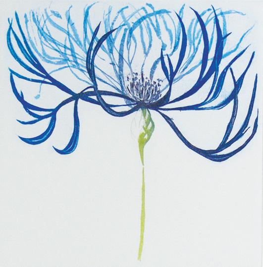 Centaurea Montana II