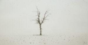 Lars Nyberg - Olive Tree