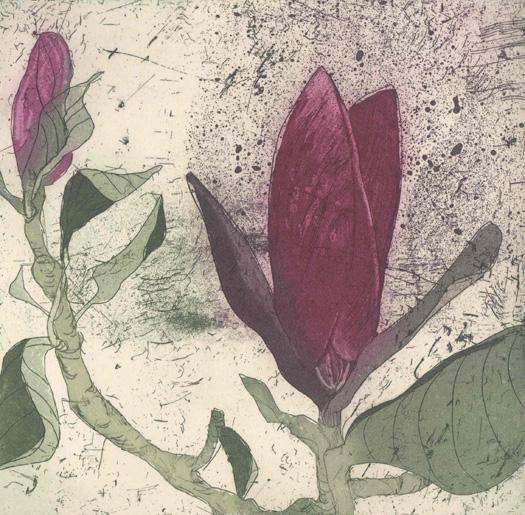 Purple Magnolia I