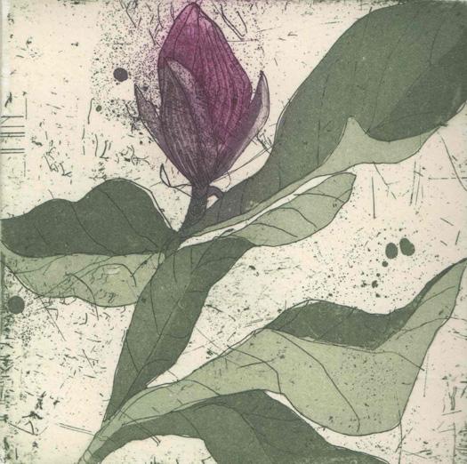 Purple Magnolia II