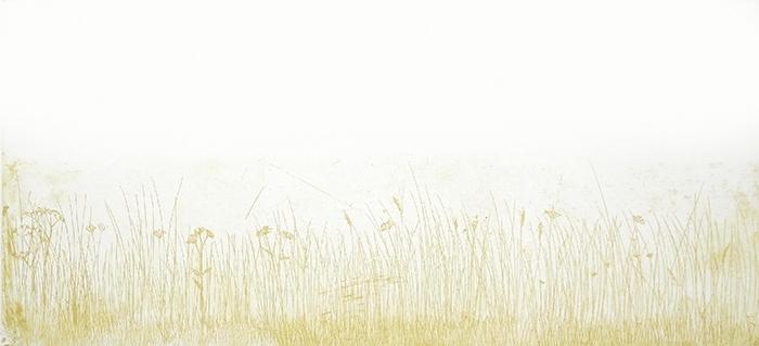 Verge Meadow