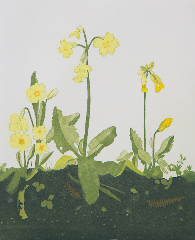 Primrose and Cowslip