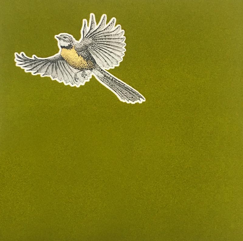 Fantail – Green