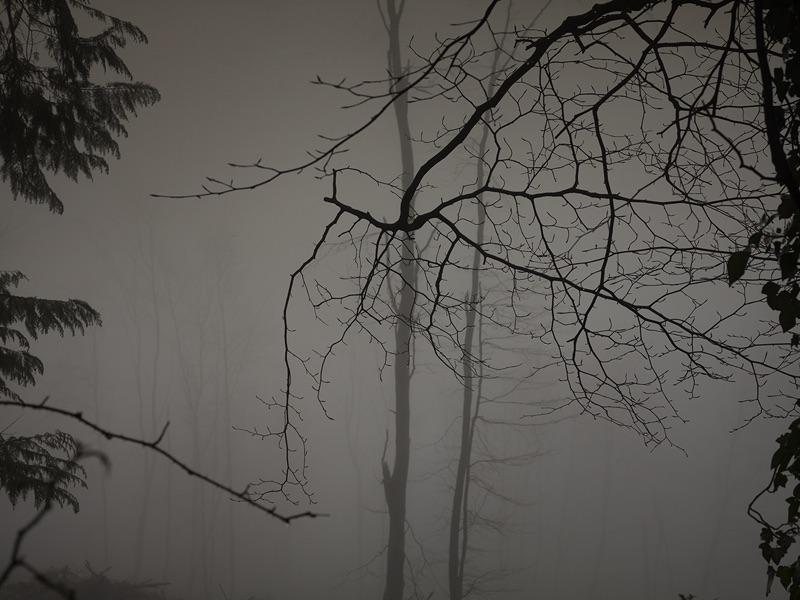 In The Quiet Light #3