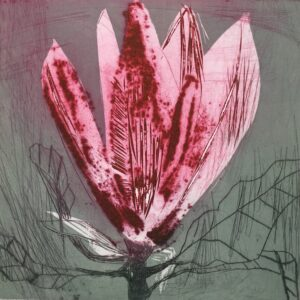Marta Wakula-Mac - Magnolia xi