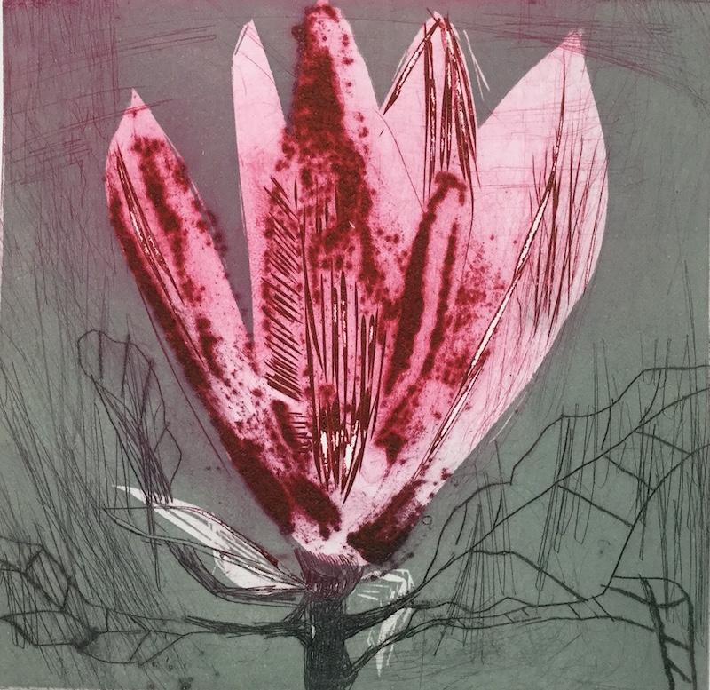 Magnolia xi