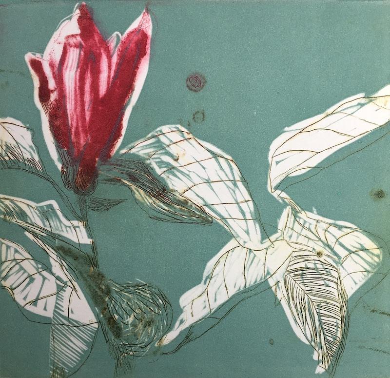 Magnolia ix