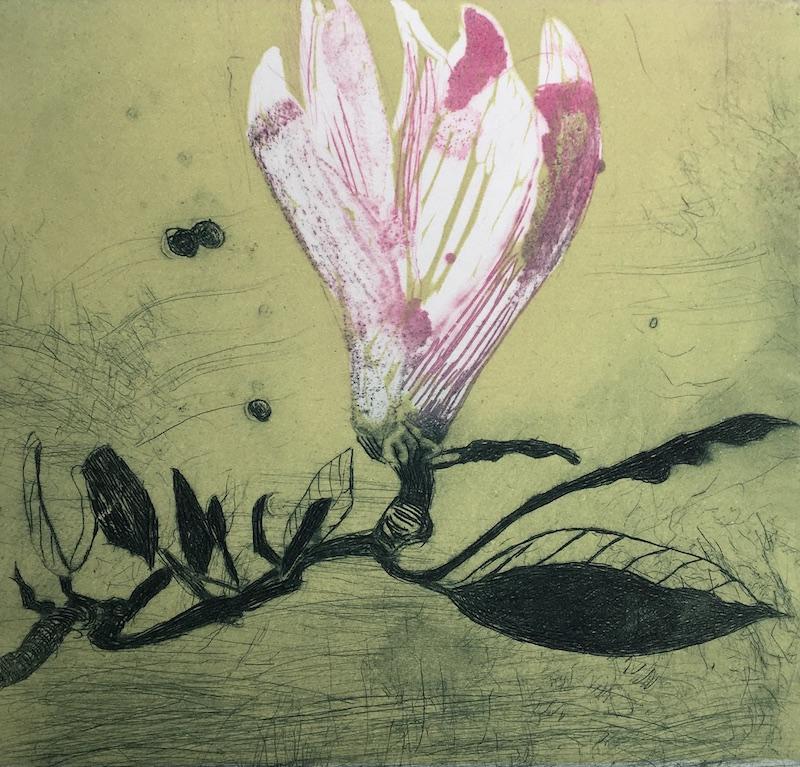 Magnolia (xii)