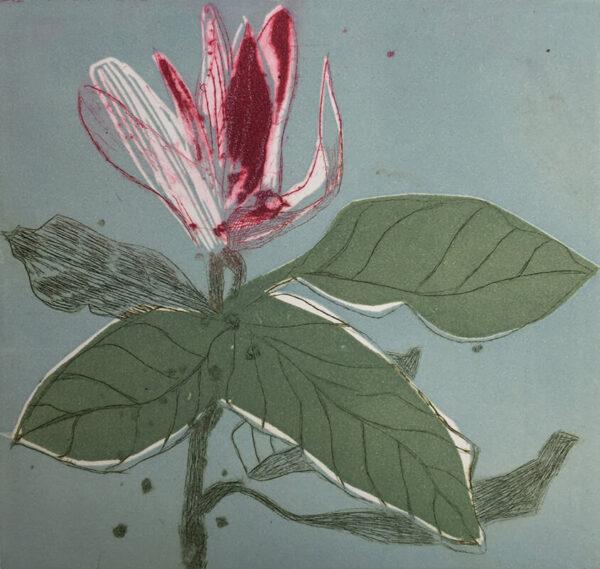 Marta Wakula-Mac - Magnolia x
