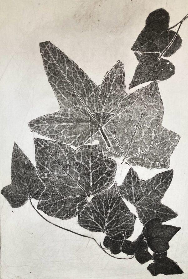 Marta Szymczyk - Ivy Impression (black & white)