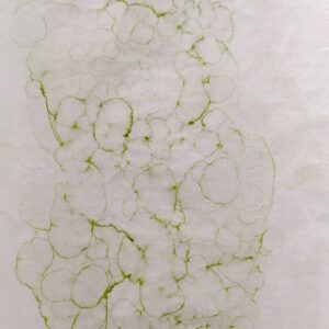 Marta Szymczyk - Ivy Extract (iii)